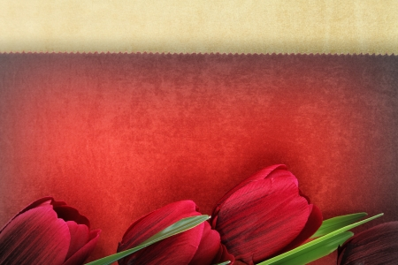 Beautiful tulip flowers on vintage background photo