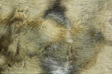 textura pelo: Primer plano de fondo de pieles