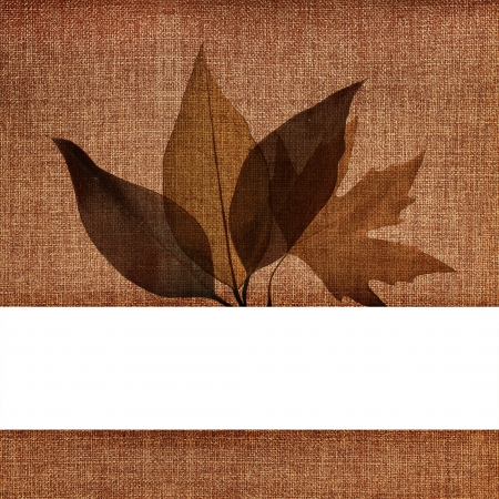 Autumn leaves on fabric texture with empty banner photo