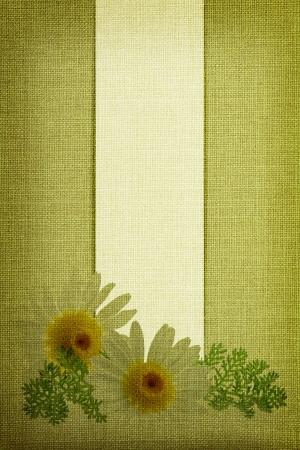 Daisy flowers on fabric texture  photo