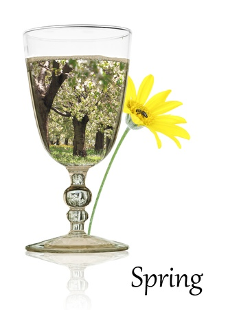 Spring beauty in a glass of water photo