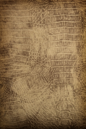 cuir: la texture de fond en cuir