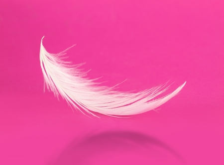 feather boa: Flying white feather with shadow on pink background  Stock Photo