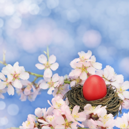 easter tree: Easter egg in the nest on the almond tree