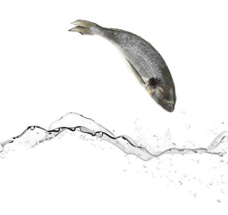 vis: Zeebaars vissen springen in het water Stockfoto