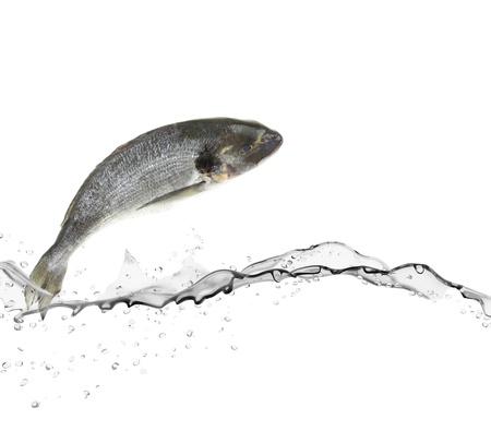 fish store: Lubina pescado que salta del agua