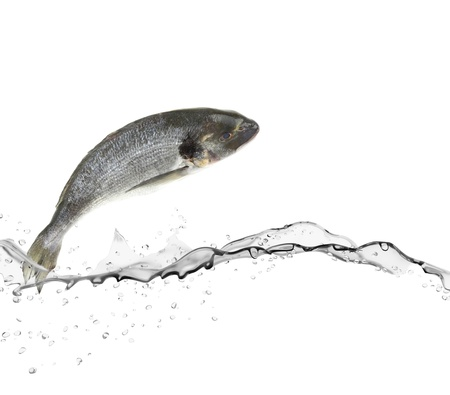 raw fish: Sea bass fish jumping from water