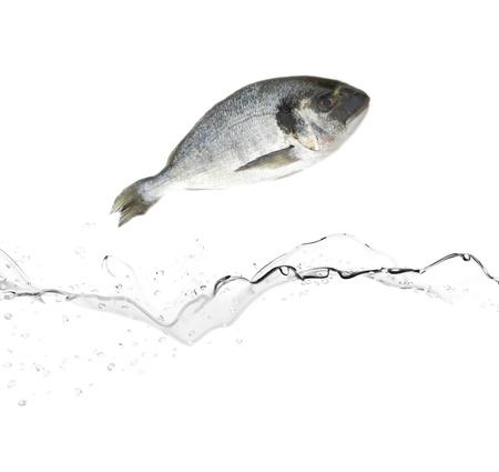 fish store: Besugo pez saltando de agua