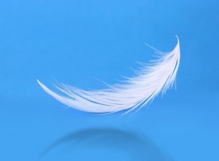 Flying pluma blanca sobre fondo azul