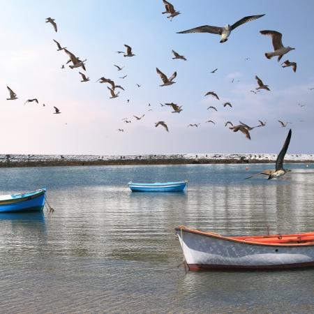 marine bird: Barcos de pesca en el puerto de la isla de Mykonos rodeados de gaviotas Foto de archivo