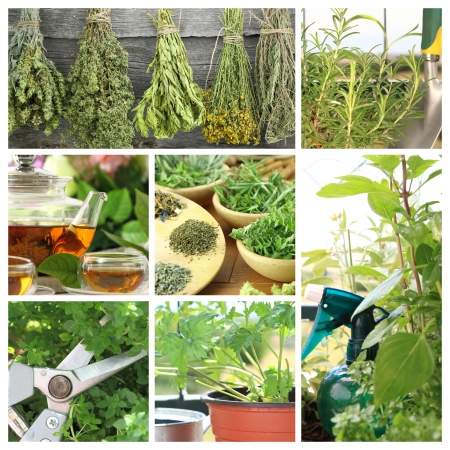herb tea: Collage of fresh herbs on balcony garden