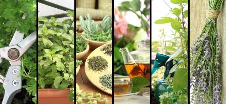 Banners of fresh herbs on balcony garden