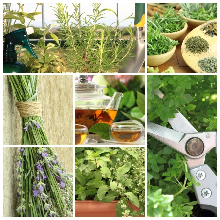Collage of fresh herbs on balcony garden photo