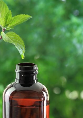 elixir: Gota que cae de la hoja de menta en una botella de aceite esencial Foto de archivo