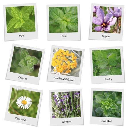 Collection of herbs and spices photo frames photo