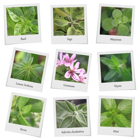Raccolta di erbe e spezie cornici