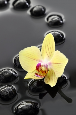 naturopathy: Black Zen stones and orchid on calm water background