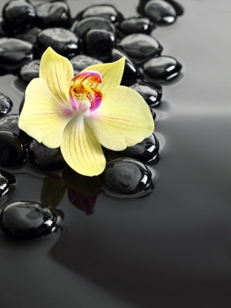 Black Zen stones and orchid on calm water background Stock Photo