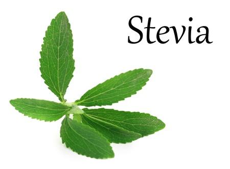 sweetener: Stevia Rebaudiana leaves isolated on white background Stock Photo