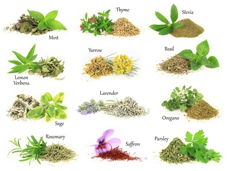 epices: Collection d'herbes aromatiques fra�ches et s�ches
