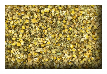 Close up of dried chamomile photo