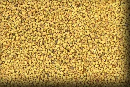 fenugreek: Close up of dried fenugreek