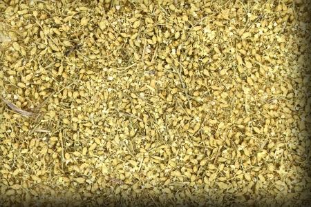 yarrow: Close up of dried yarrow Stock Photo