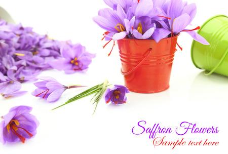 safran: Saffron flowers on white background