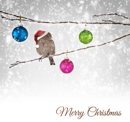 Christmas balls and sparrow bird with Santa Claus hat on snowy branch photo
