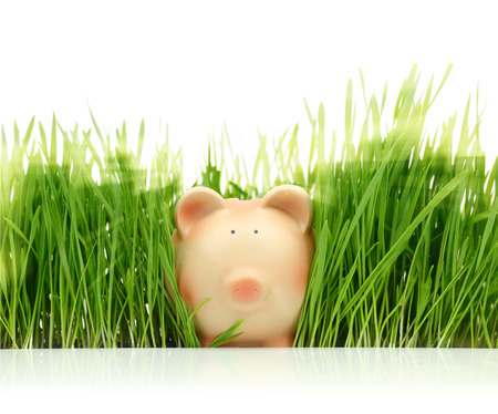Piggy bank with green grass isolated on white  photo