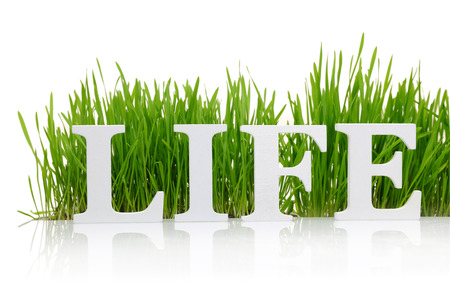 meaning: Word Life with fresh grass isolated on white Stock Photo