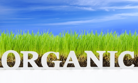 Word Organic with fresh grass and blue sky Stock Photo
