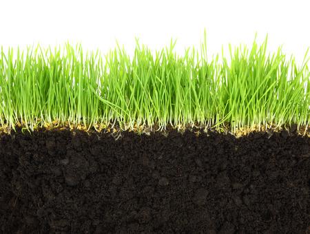 흰색 배경에 고립 된 토양과 잔디의 단면
