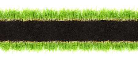 wheat grass: Cross-section frame of soil and grass isolated on white