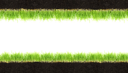 middle easter: Cross-section frame of soil and grass isolated on white
