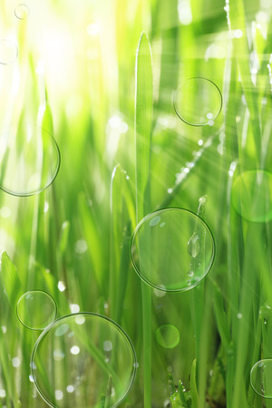 Bright sunny background with wet grass and soap bubbles photo