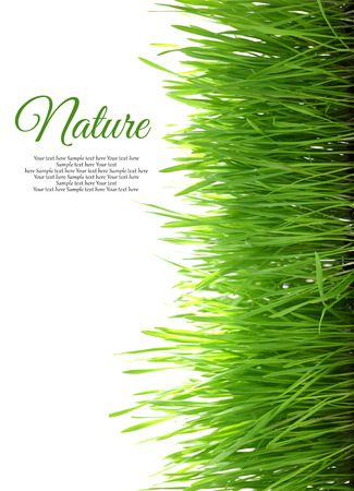 Grass with copy-space vertical isolated on white background photo