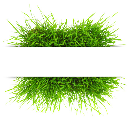 blades of grass: Natural banner with fresh grass isolated on white background
