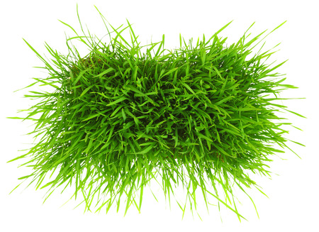 Patch of green grass isolated on white background  photo