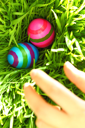 egg hunt: Hand reaching for Easter eggs on green grass