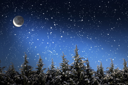 Beautiful winter landscape with snow covered trees at night photo