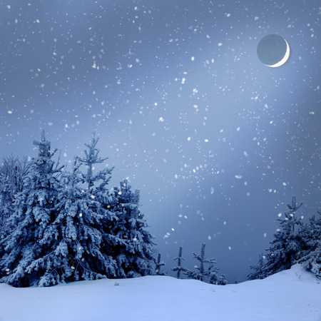 wintery: Beautiful winter landscape with snow covered trees at night Stock Photo