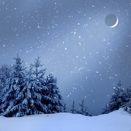 Hermoso paisaje de invierno con árboles cubiertos de nieve en la noche