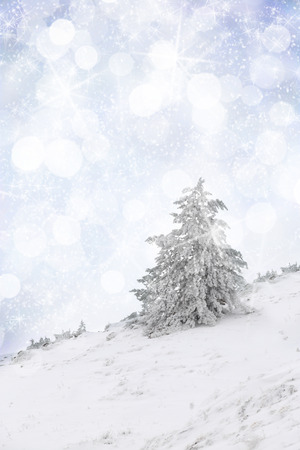 Snow covered tree on a slop photo