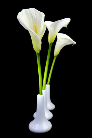 Calla lilies in white vases on black background photo