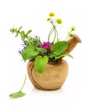 Mortar and pestle with fresh herbs  photo