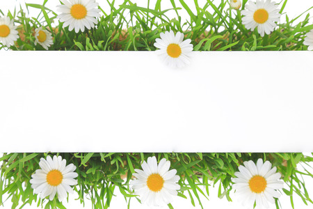 Banner on grass and white flowers background photo