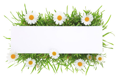 white daisy: Banner with grass and flowers isolated on white background