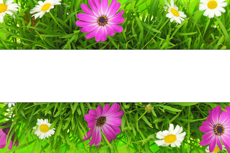 Banner on grass, pink and white flowers background photo
