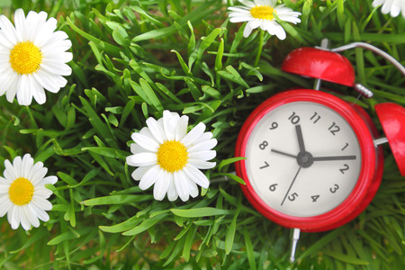Red clock on green grass with flowers background  photo